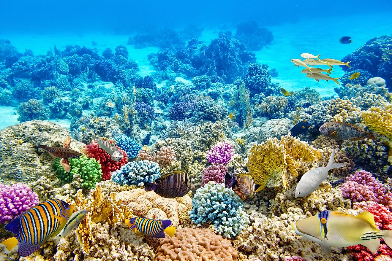 Colorful marine life in the coral reef ecosystem.