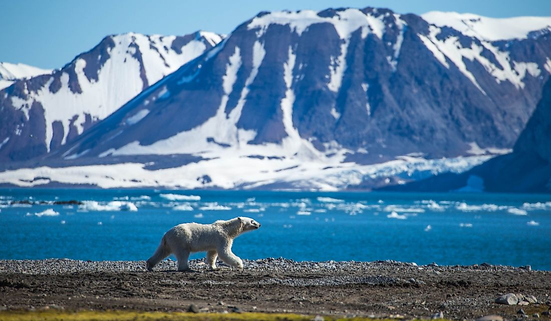 Polar bears are just some of the wildlife found on Spitsbergen.