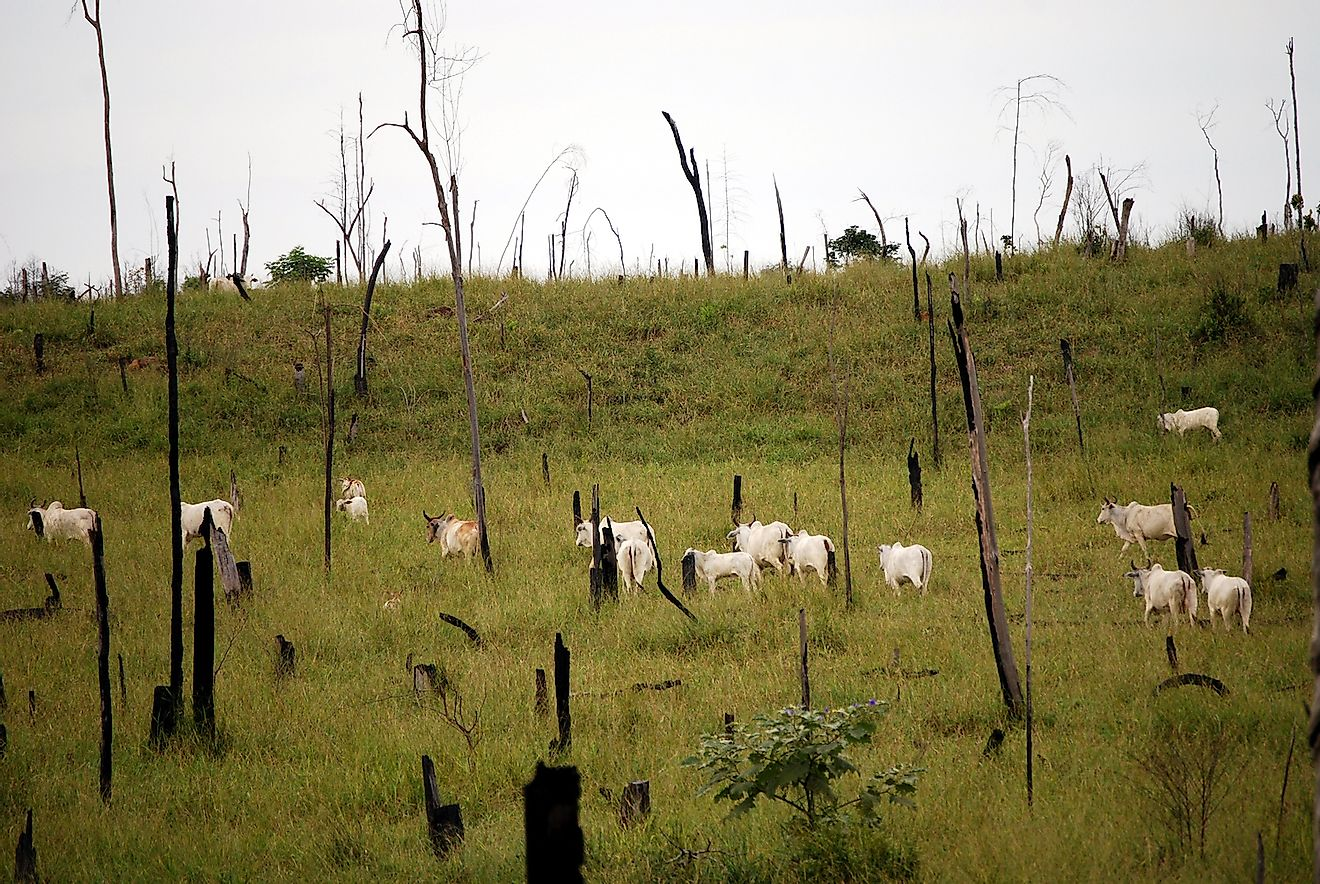 Recently cut and burned rainforest turned into a cattle ranch in the Brazilian Amazon. Image credit: Front-page/Shutterstock.com