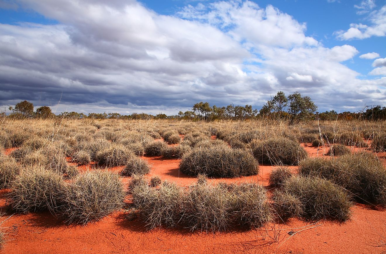Very remote spinifex grass covered spot in the Great Victoria Desert in central Australia. Image credit: N Mrtgh/Shutterstock.com