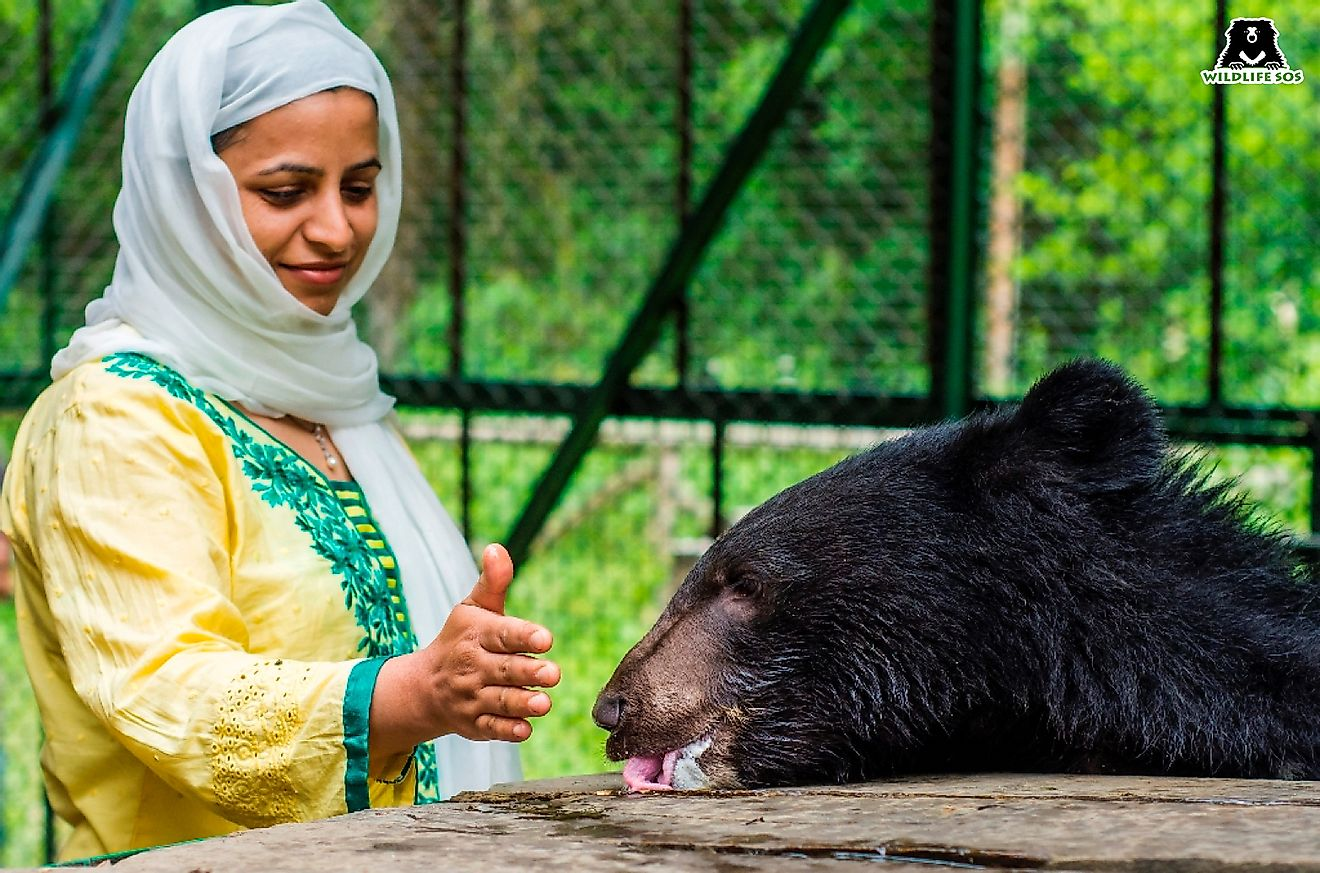 Aaliya with a rescued Himalayan Black bear at the Wildlife SOS centre. Image credit: Wildlife SOS.