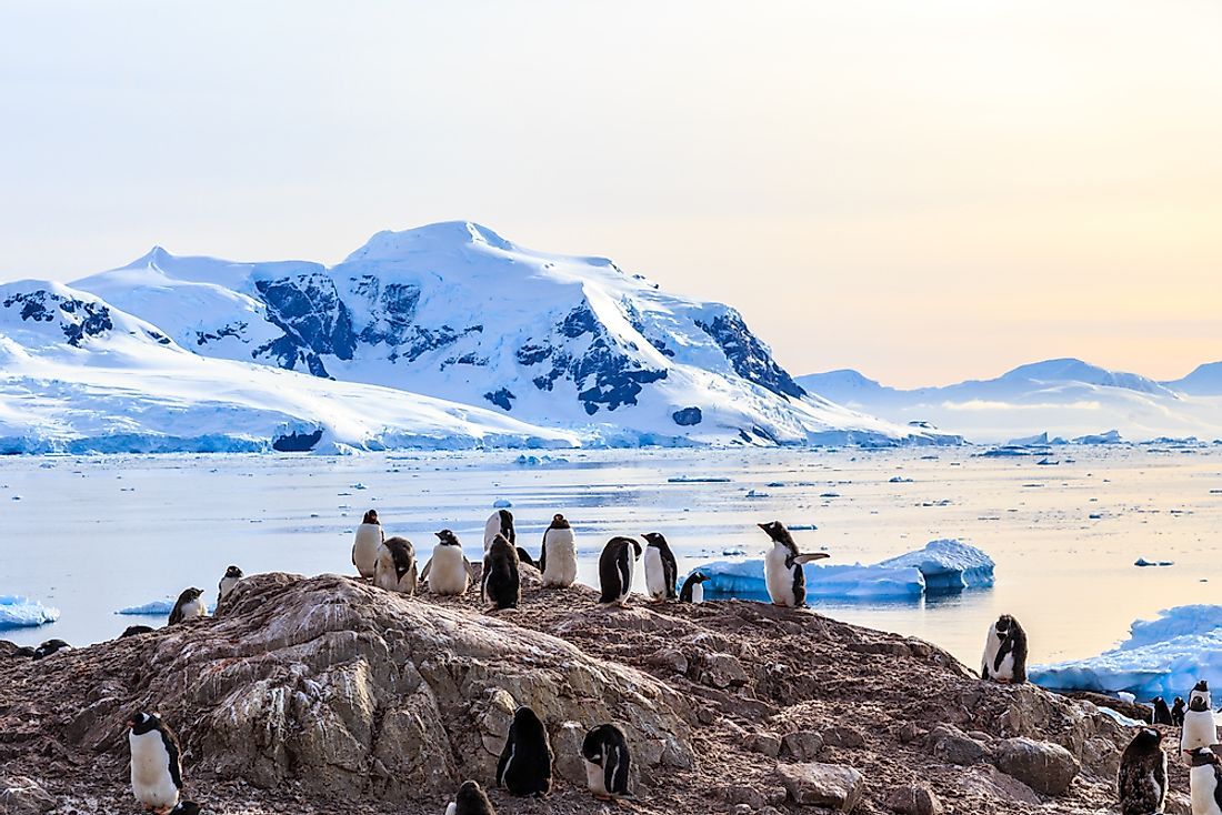 Although the Antarctic biogeographic realm is the smallest of all the realms, it is still home to animals such as penguins.