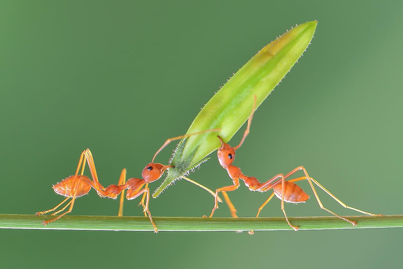 Ants are so powerful that they can carry weight that is 5,000 heavier than their own body mass.
