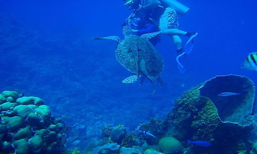 A scuba diver interacting with a sea turtle in the Belize Barrier Reef Reserve