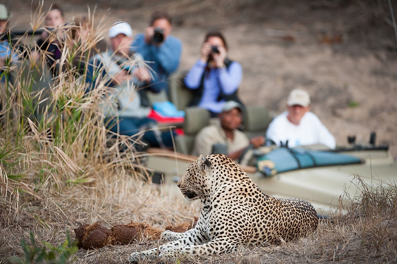Tourists enjoying a wildlife safari in South Africa. Image credit: Villiers Steyn/Shutterstock.com