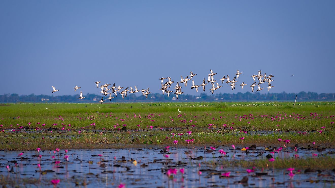 Migratory birds flying over a wetland area. Image credit: GoBOb/Shutterstock.com