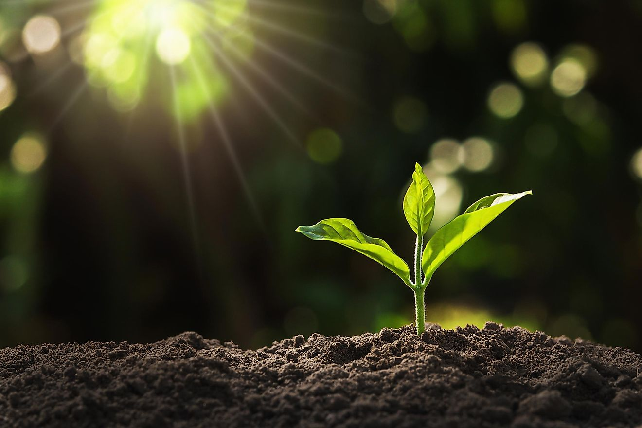 Young plant growing in a garden with sunlight. Image credit: lovelyday12/Shutterstock
