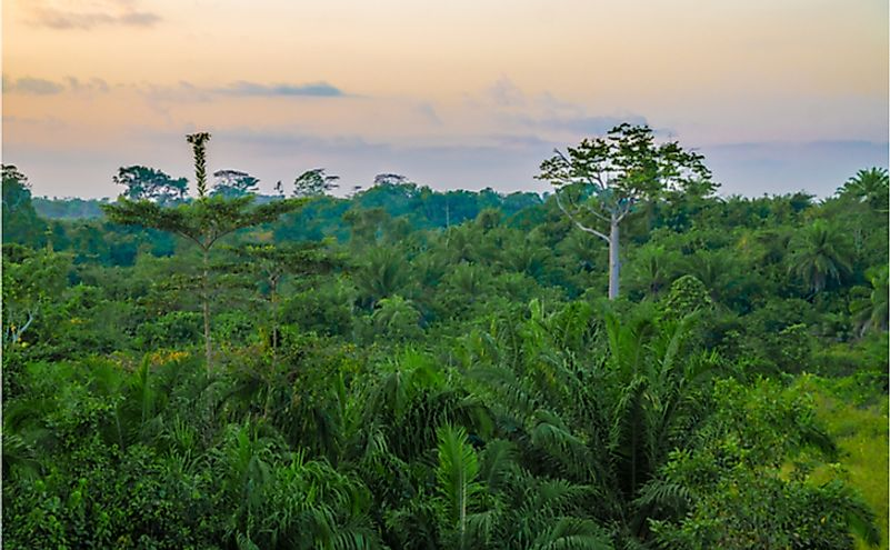 Beautiful lush green West African rain forest during amazing sunset, Liberia, West Africa.
