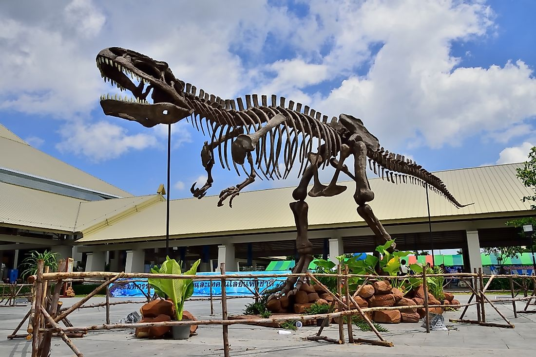 Giganotosaurus carolinii was one of the largest carnivores on land. Editorial credit: watthanachai / Shutterstock.com