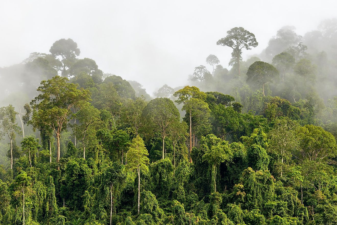Large rainforests are extremely important ecosystems on our planet.