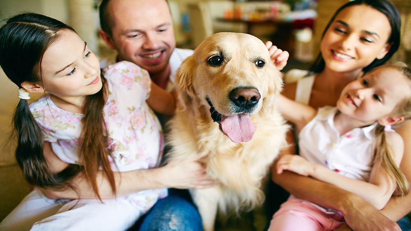 A large percentage of Canadian pet owners regard pets as members of their family.