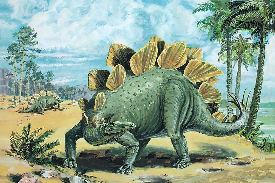 A drawing of what a Stegosaurus may have looked like.