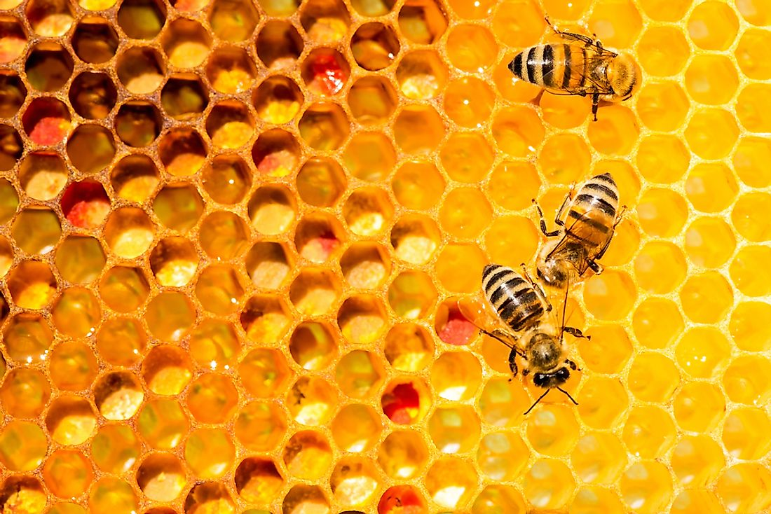 An individual honey bee will only produce about 1/12 of a teaspoon of honey during its lifespan.