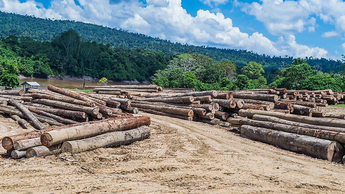 Timber cultivation in Indonesia.