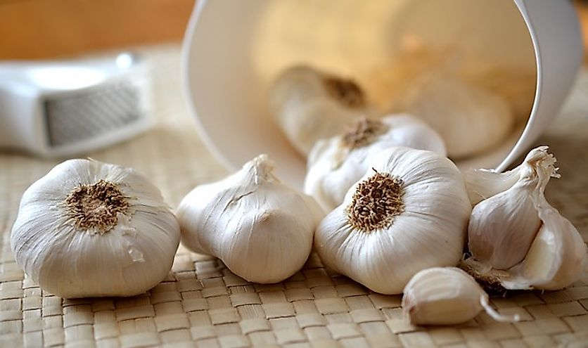 Garlic has been used since ancient times for culinary and traditional medicine preparations.