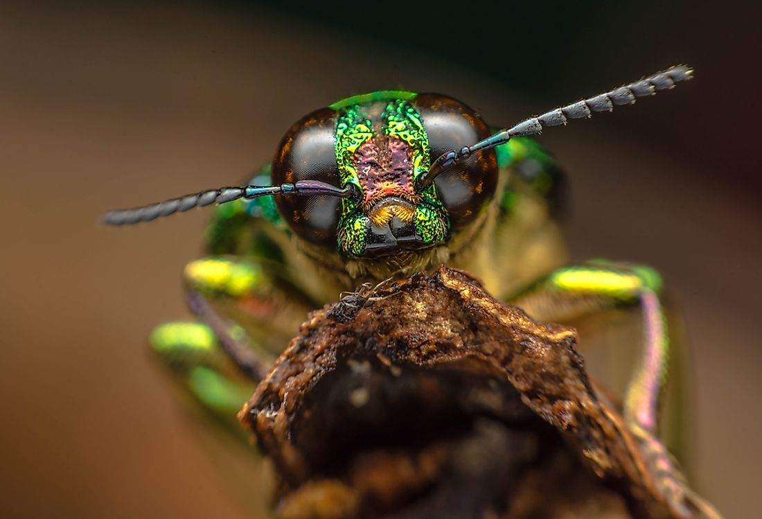Insect species make up the majority of the animal kingdom.