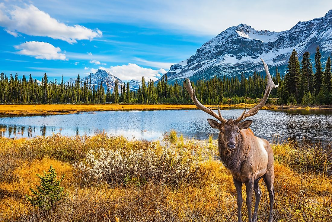 Tourists don't just travel to Canada for the moose and the mountains.