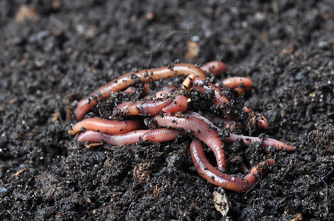 Worms in soil.