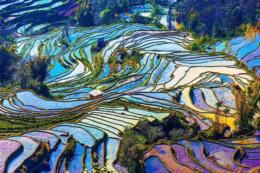 The unique rice terraces of Yuanyang County, China.