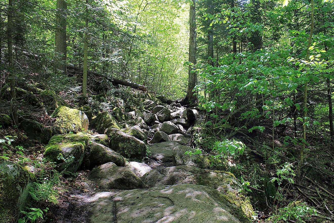 Adirondack Mountains; Trail to Cascade Mountain. Image credit: Yinan Chen/Public Domain