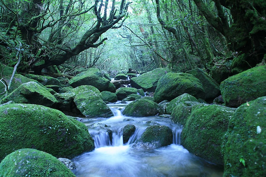 Yakushima, a UNESCO World Heritage Site in Japan.
