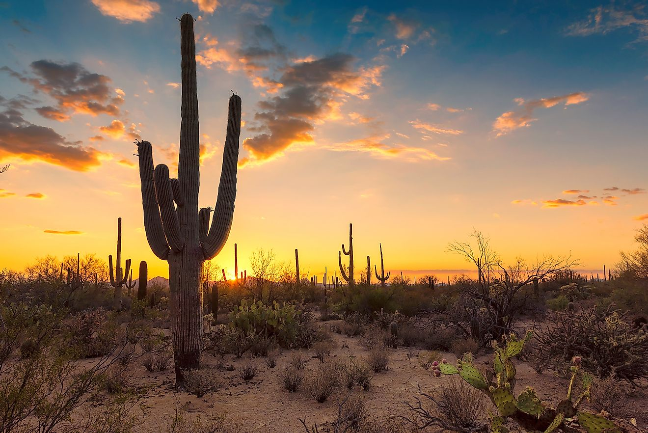 Sunset in the Wild West in the Sonoran Desert near Phoenix. Image credit: Lucky-photographer/Shutterstock.com