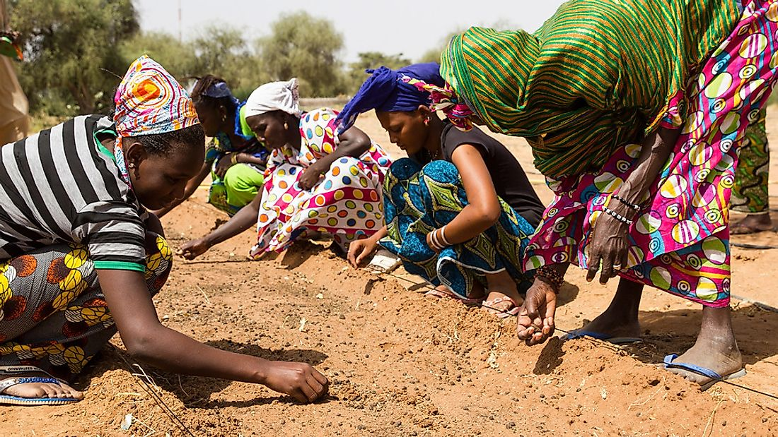 Women planting seedlings.
