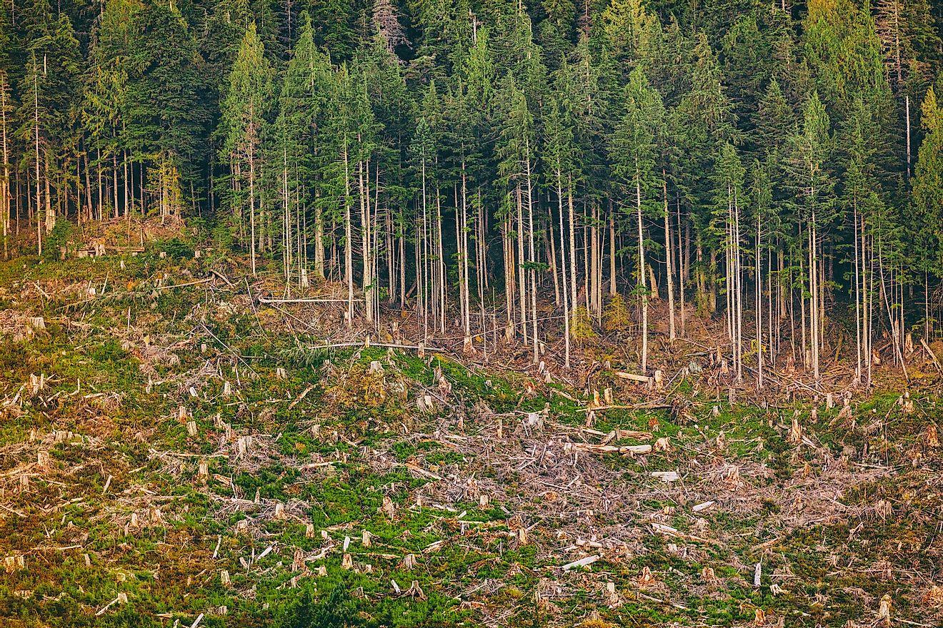 Deforestation of a forest in Alaska. Image credit: Maridav/Shutterstock.com
