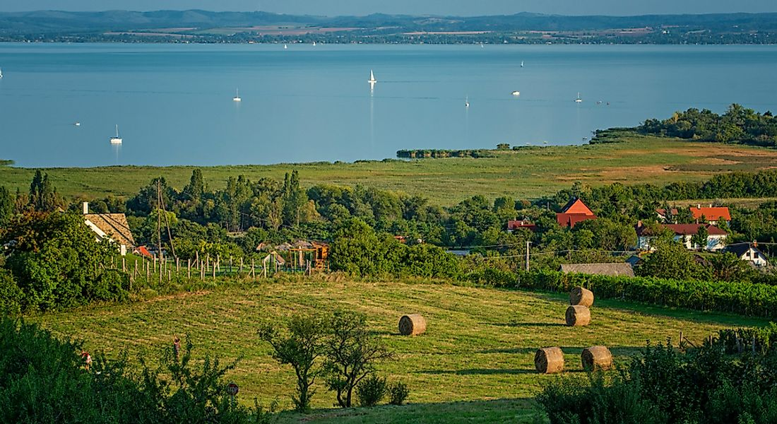 A vineyard in Hungary.