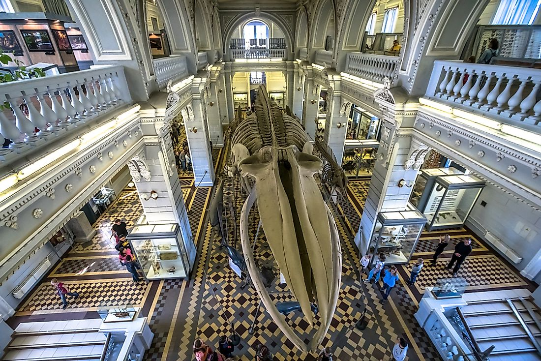 Skeleton of a blue whale adorns the central hall of a museum. Editorial credit: akedesign / Shutterstock.com