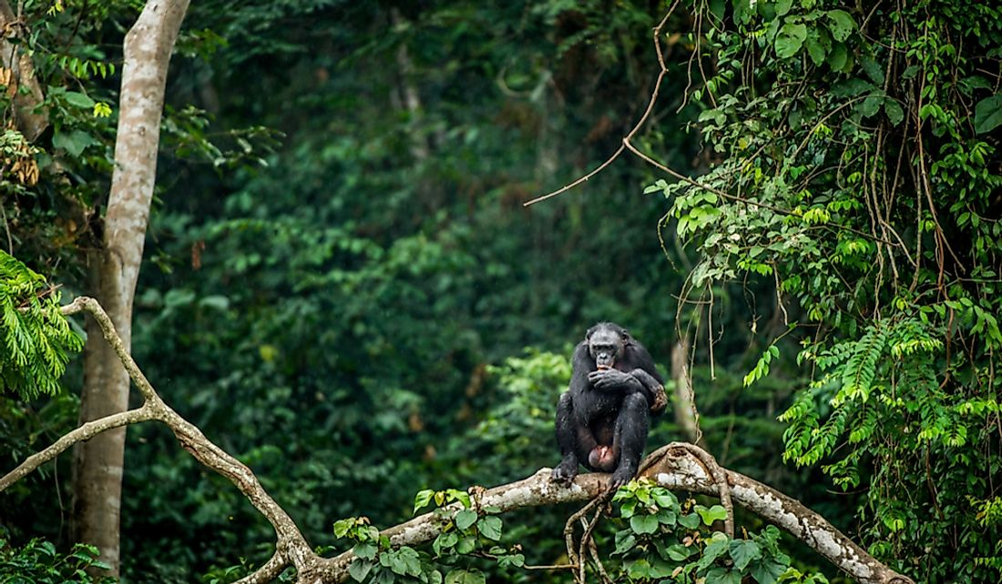 Wildlife and forests are two of the natural resources of the Democratic Republic of the Congo.