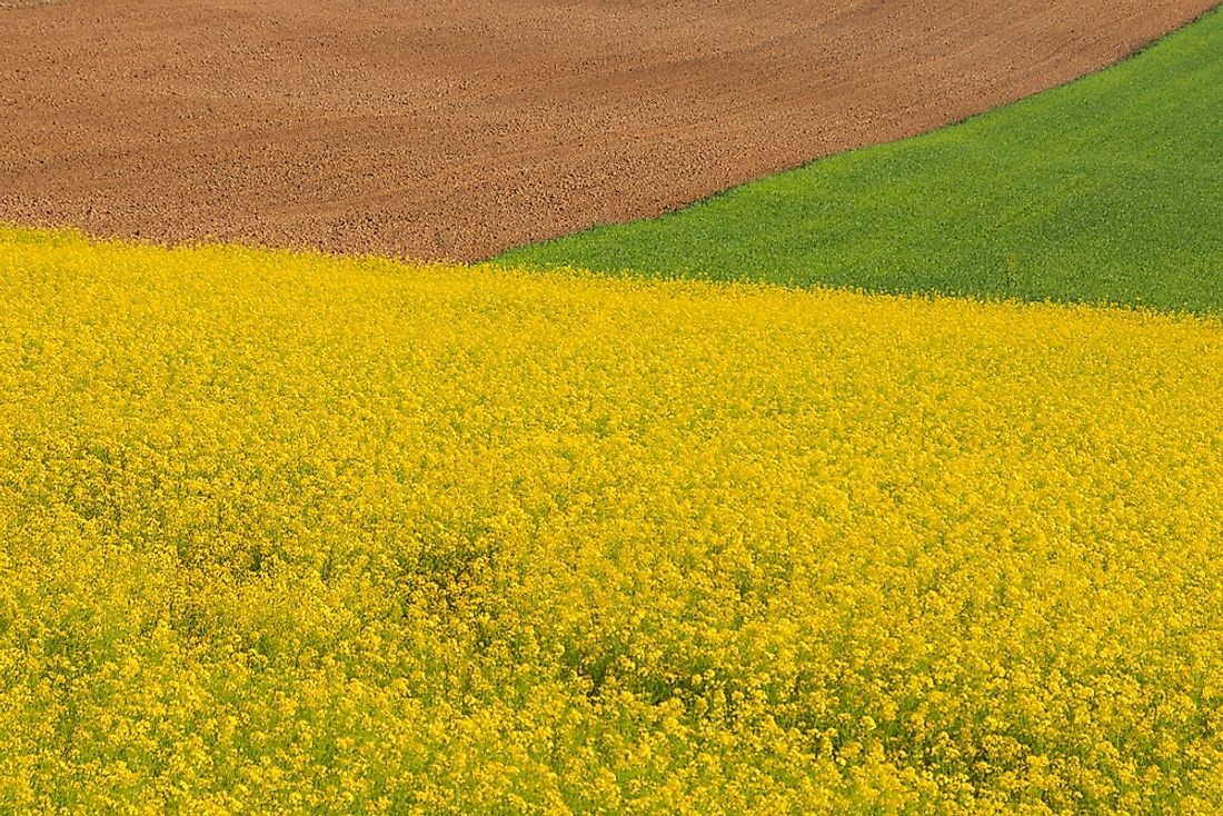 Fields of the Pannonian Plain in Central Europe.