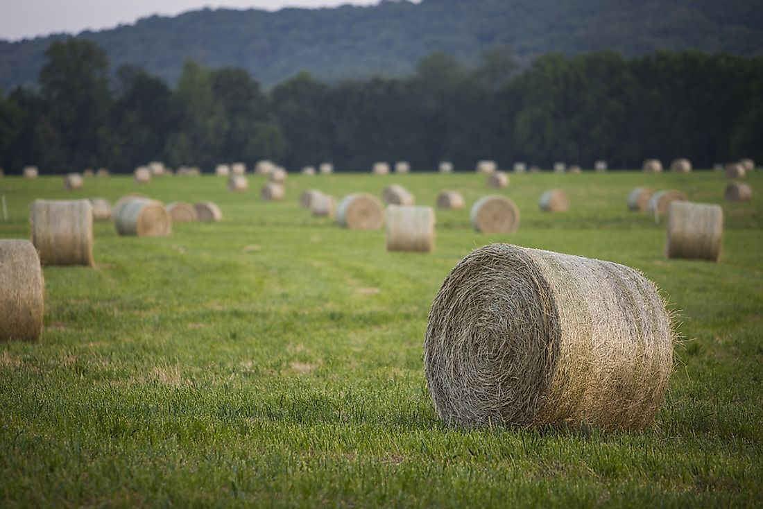 Hay bales in Arkansas.