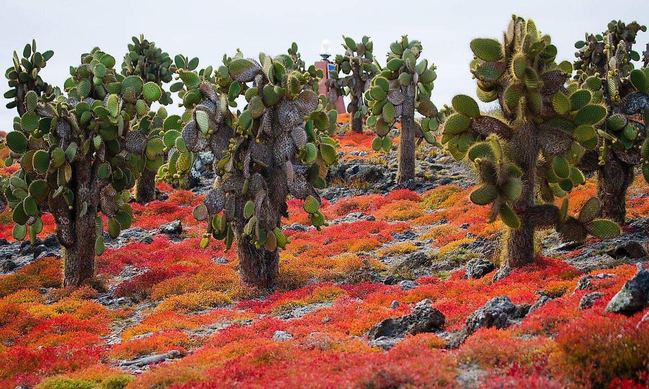 Beautiful landscape with prickly pear cactus in the Galapagos Islands. Image credit: GUDKOV ANDREY/Shutterstock.com