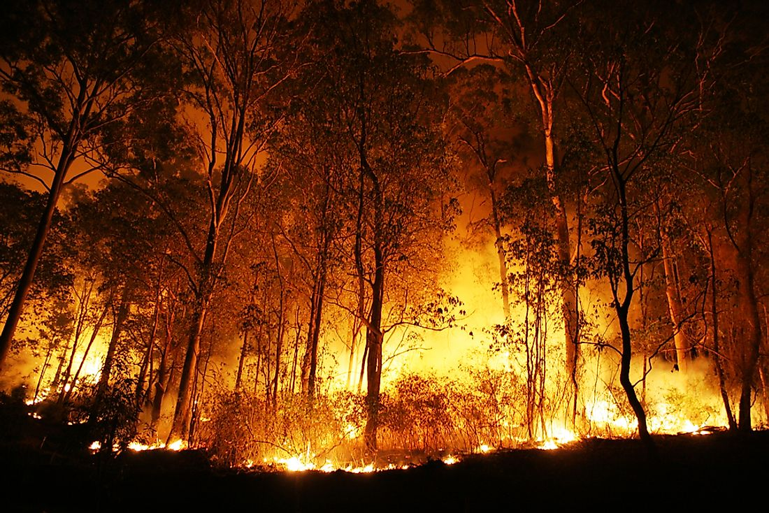 Bushfires are often incredibly destructive.