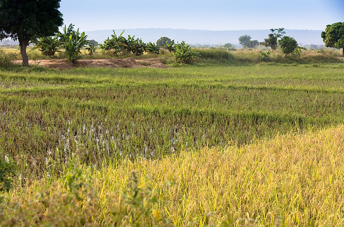 Rice cultivation in Burkina Faso.