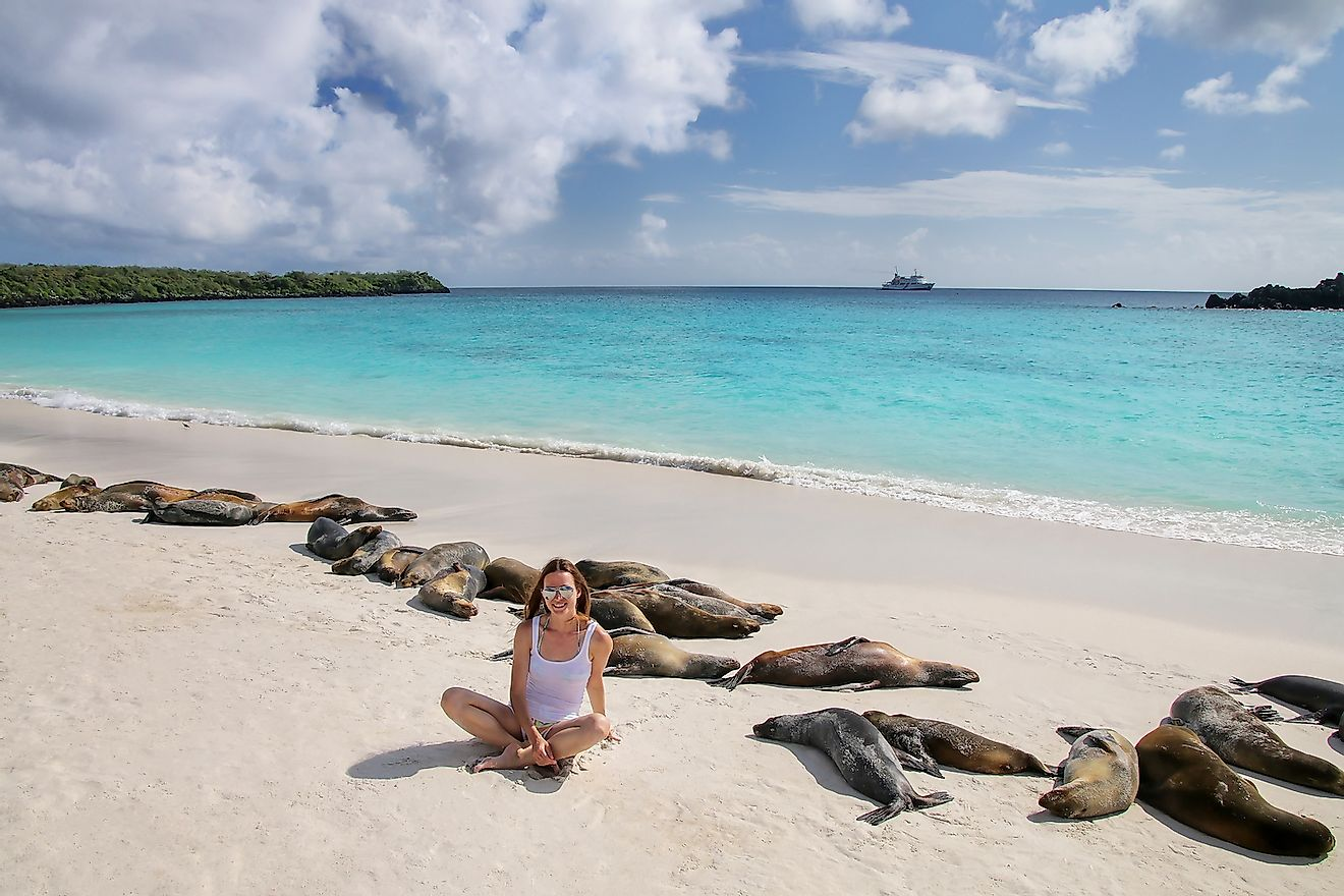 A pristine white beach with seals in the Galapagos. Image credit: Don Mammoser/Shutterstock.com