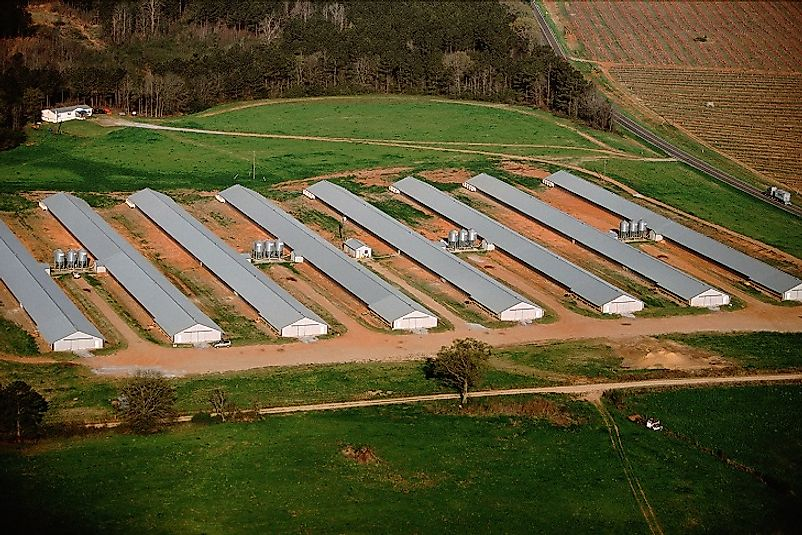 Massive chicken houses on a farm in the U.S. state of Georgia.