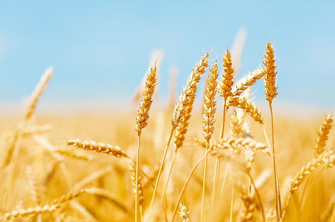 "The term ""breadbasket"" is a term used to refer to an area with highly arable land."