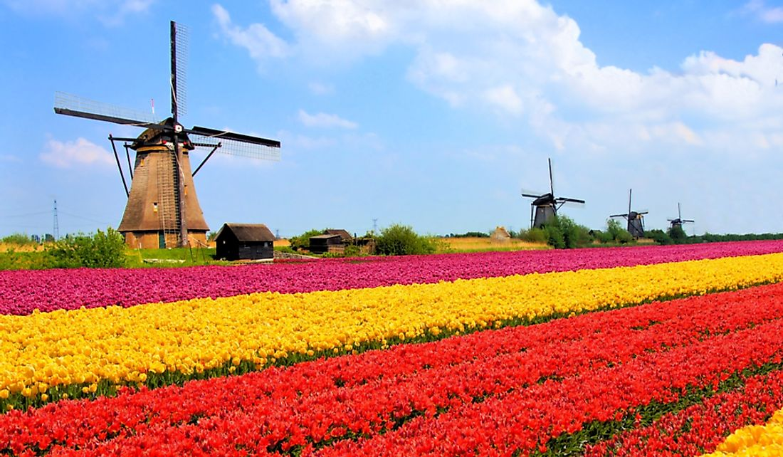 Tulip fields in the Netherlands.