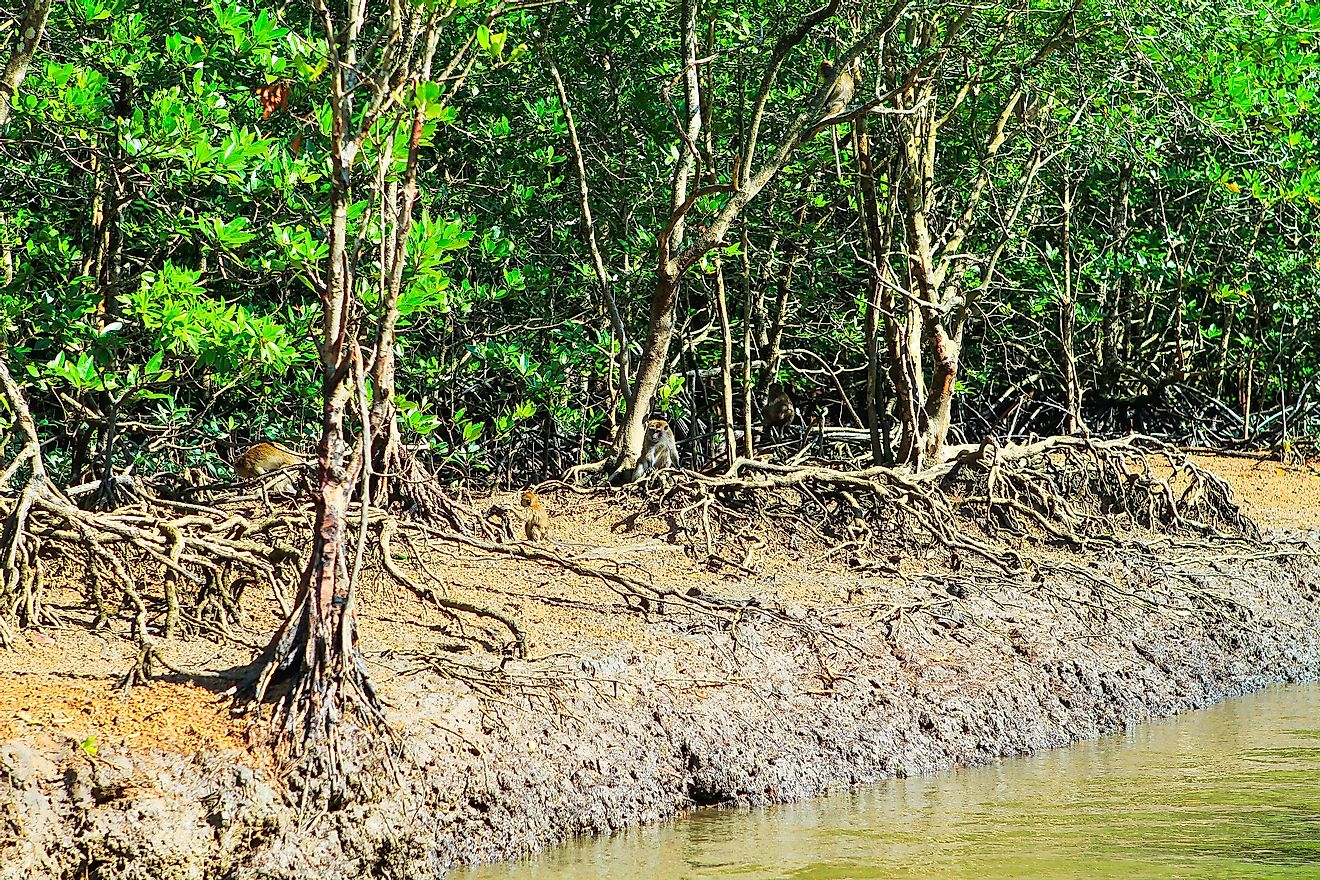 A mangrove system in Malaysia