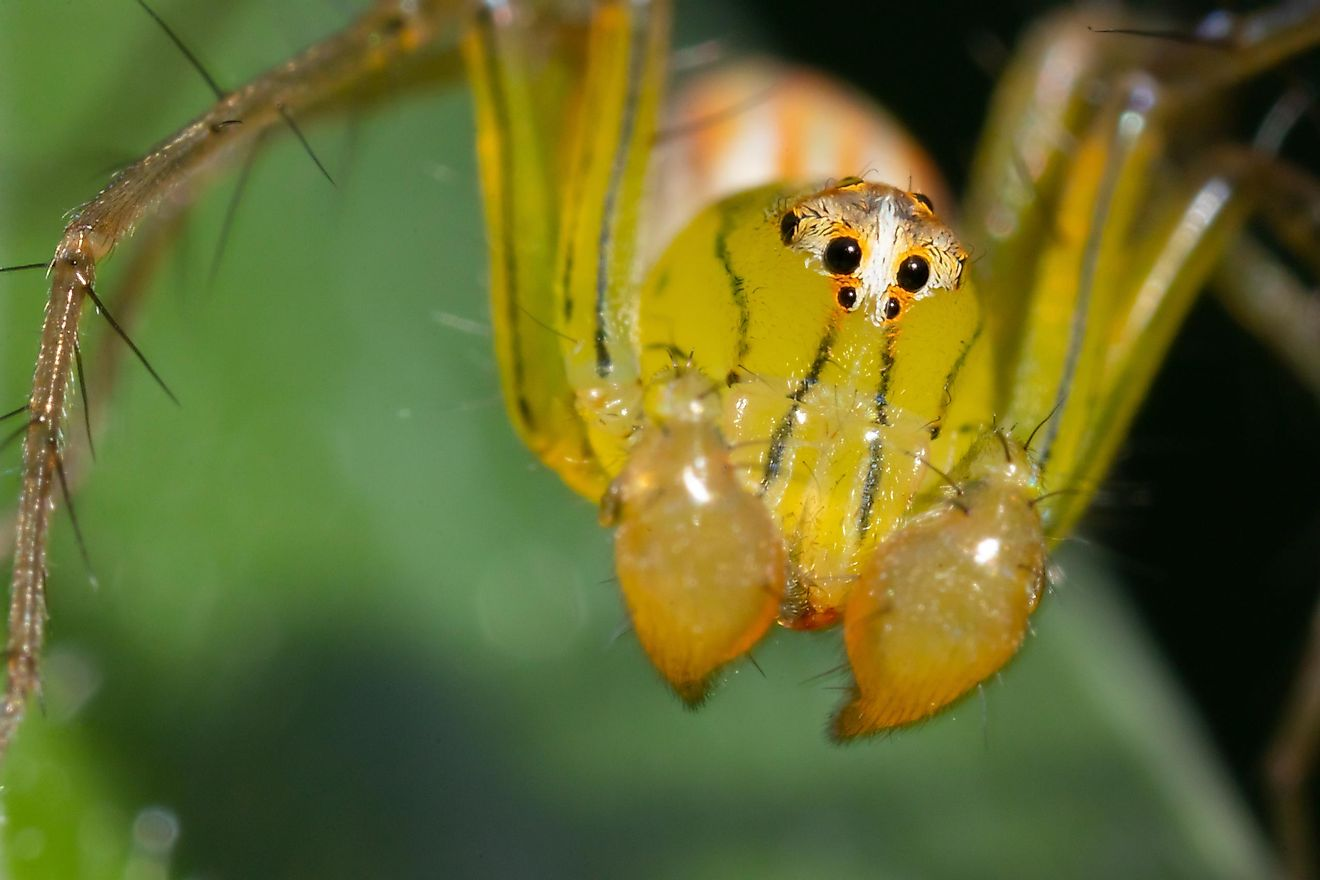 In many cases, a primal fear of spiders is in fact well founded, and may save one's life.
