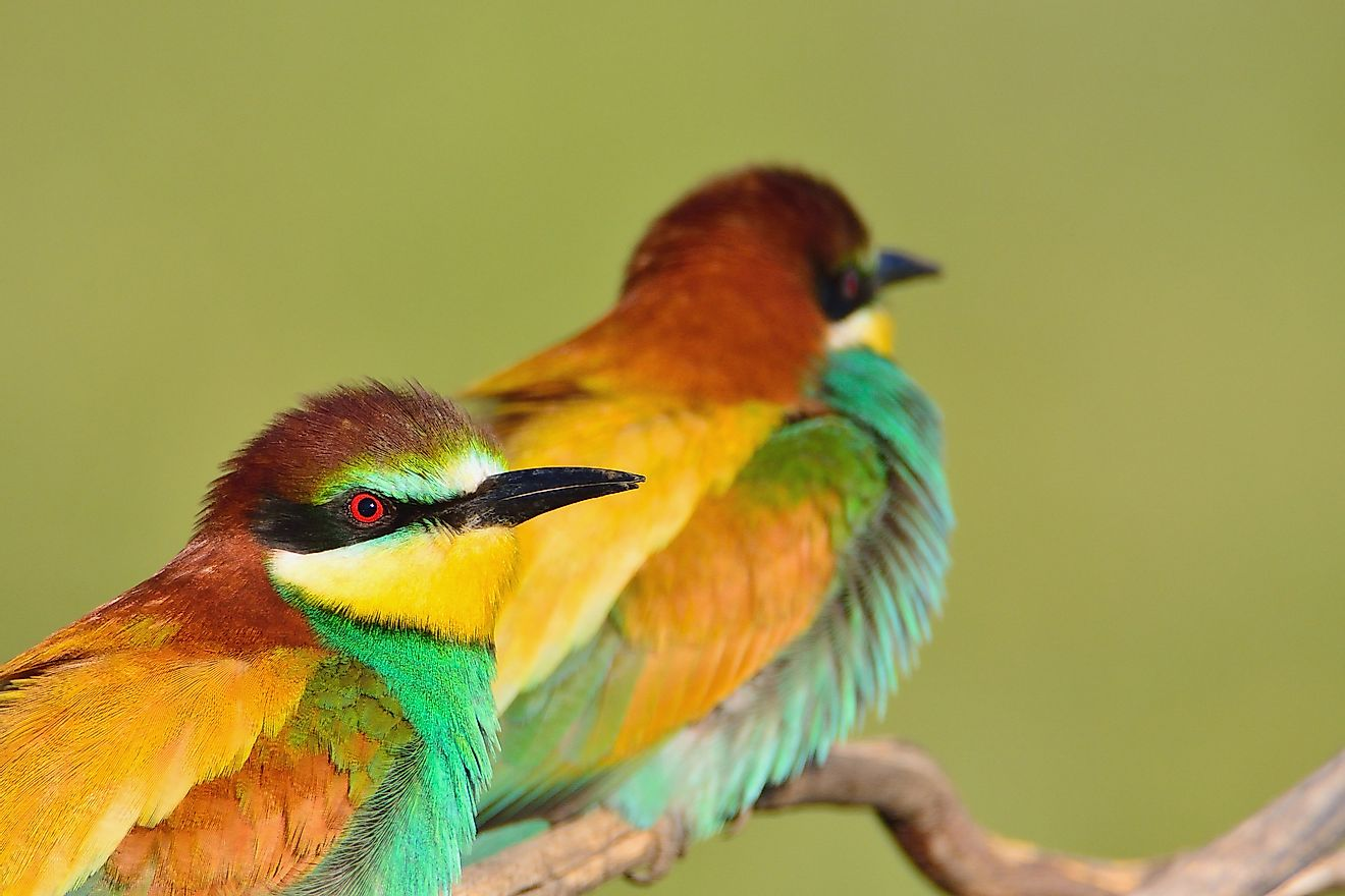 The European bee-eater can be found in Germany.