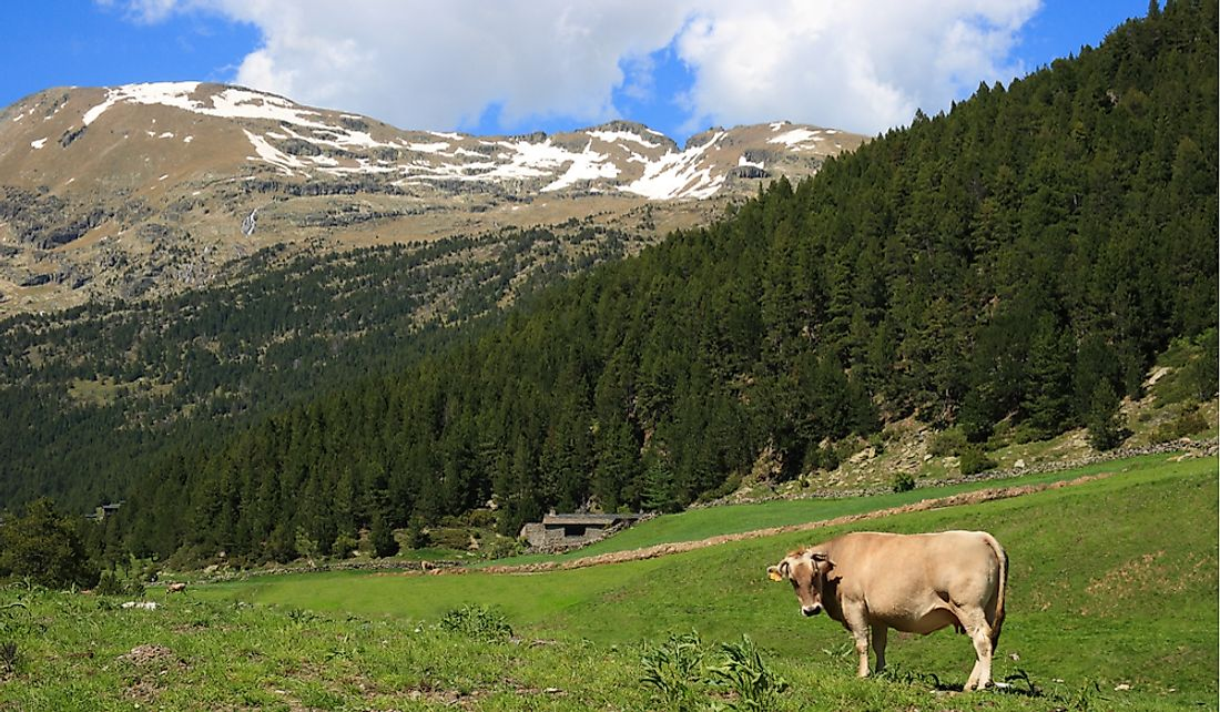 Andorra's mountainous regions are used for livestock farming.