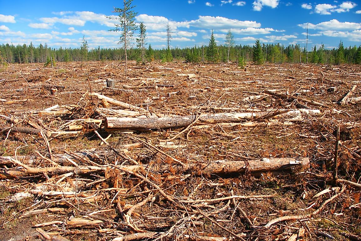 Habitat destruction is one of the factors affecting the endangered animals of North America.