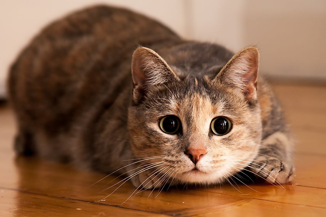 Cats are extremely expressive animals, although this can go unnoticed by humans.
