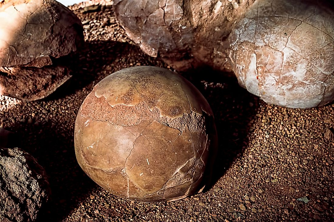 Fossilized Dinosaur Eggs.
