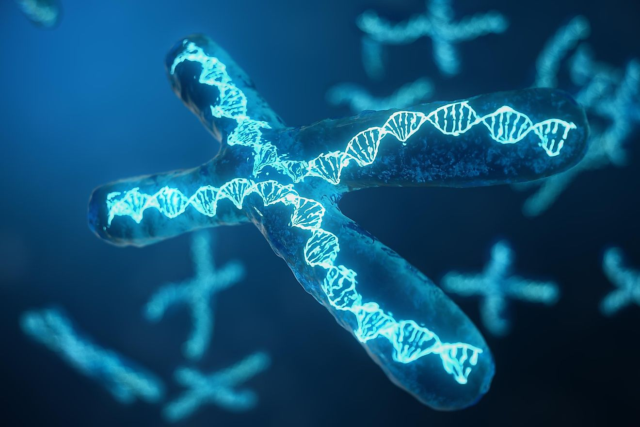 X-Chromosomes with DNA carrying the genetic code.