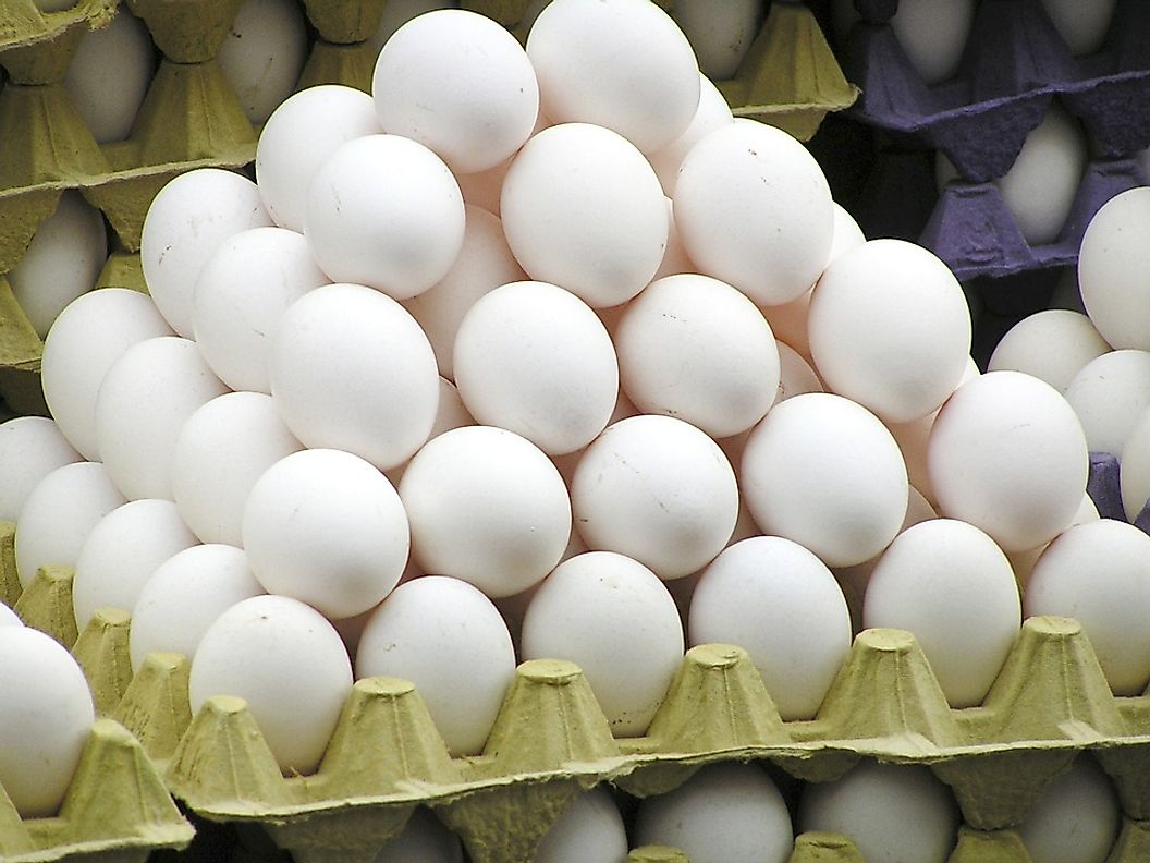 Eggs are an important source of protein in our diet.