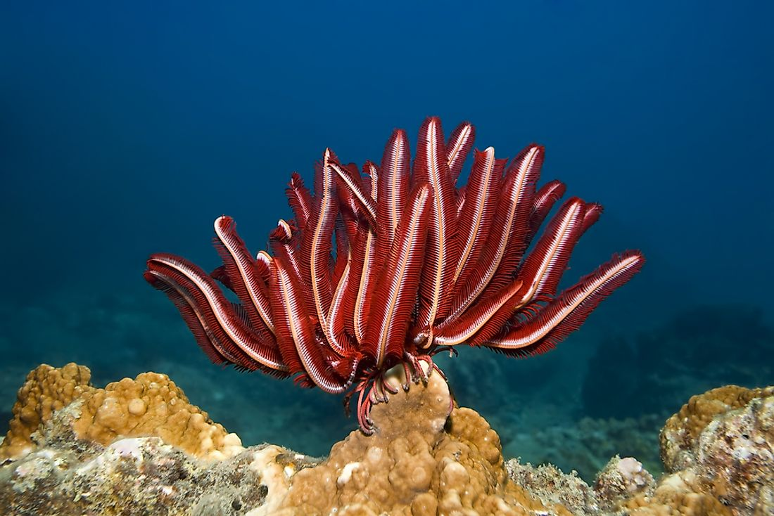 Feather stars live on coral reefs.
